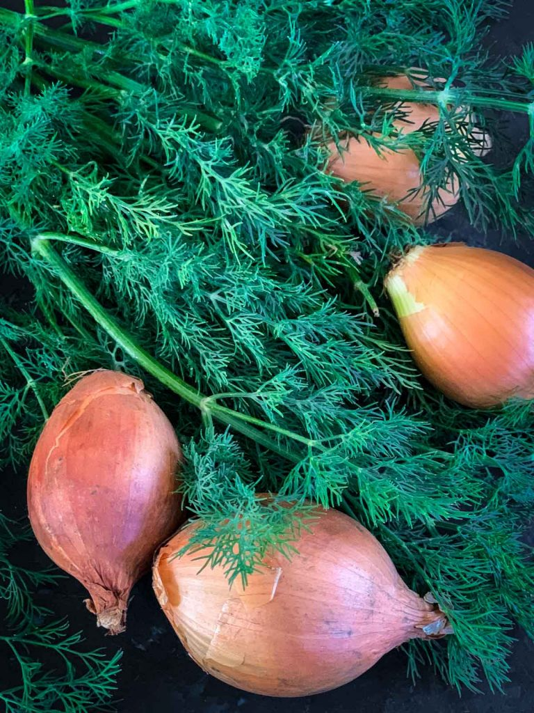Stalks of fresh dill and shallots