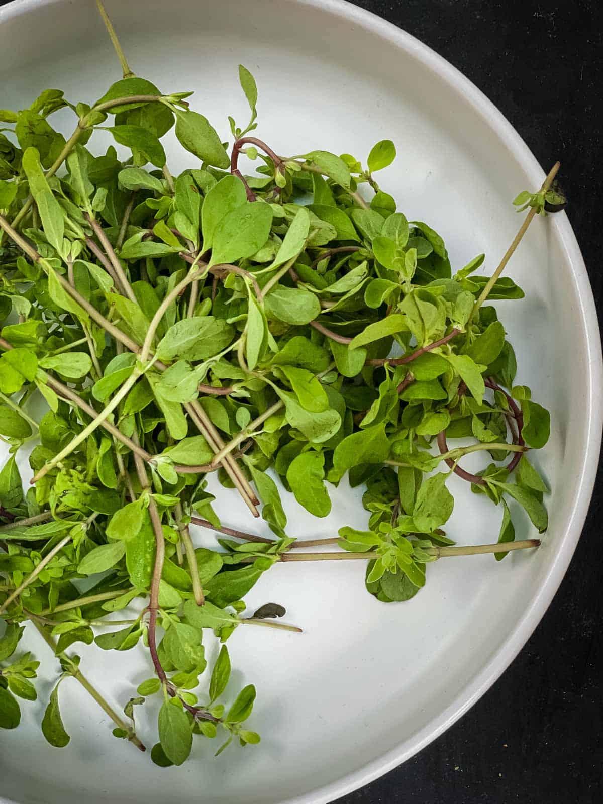 Fresh marjoram herb