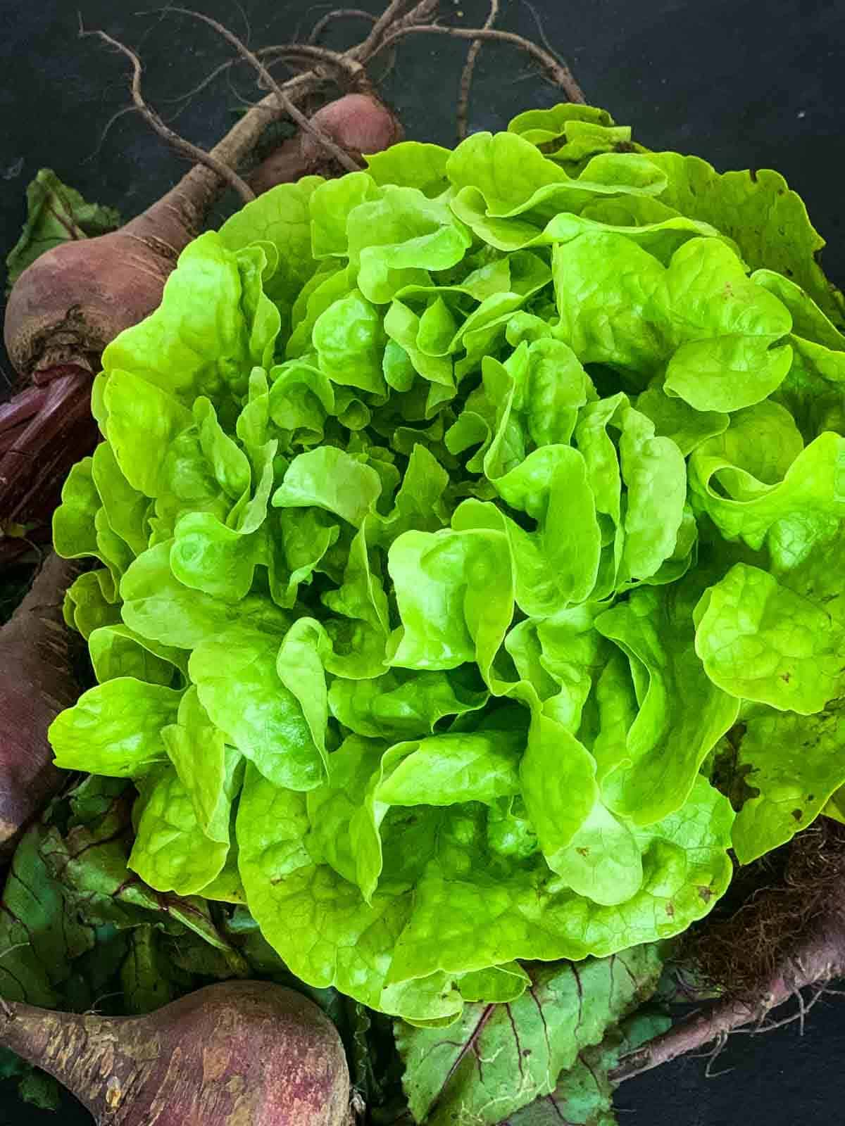 Whole oak lettuce and beetroot
